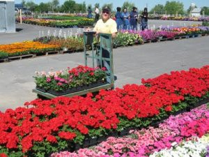 Man working at the flower auction