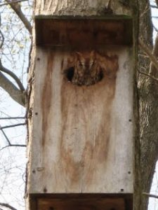 Owl in his box