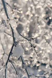 Branch frozen in ice and snow