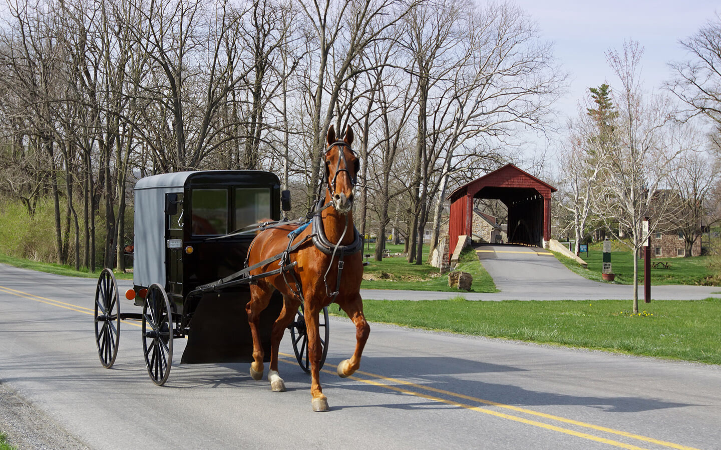 Horse carriage in Amish Country