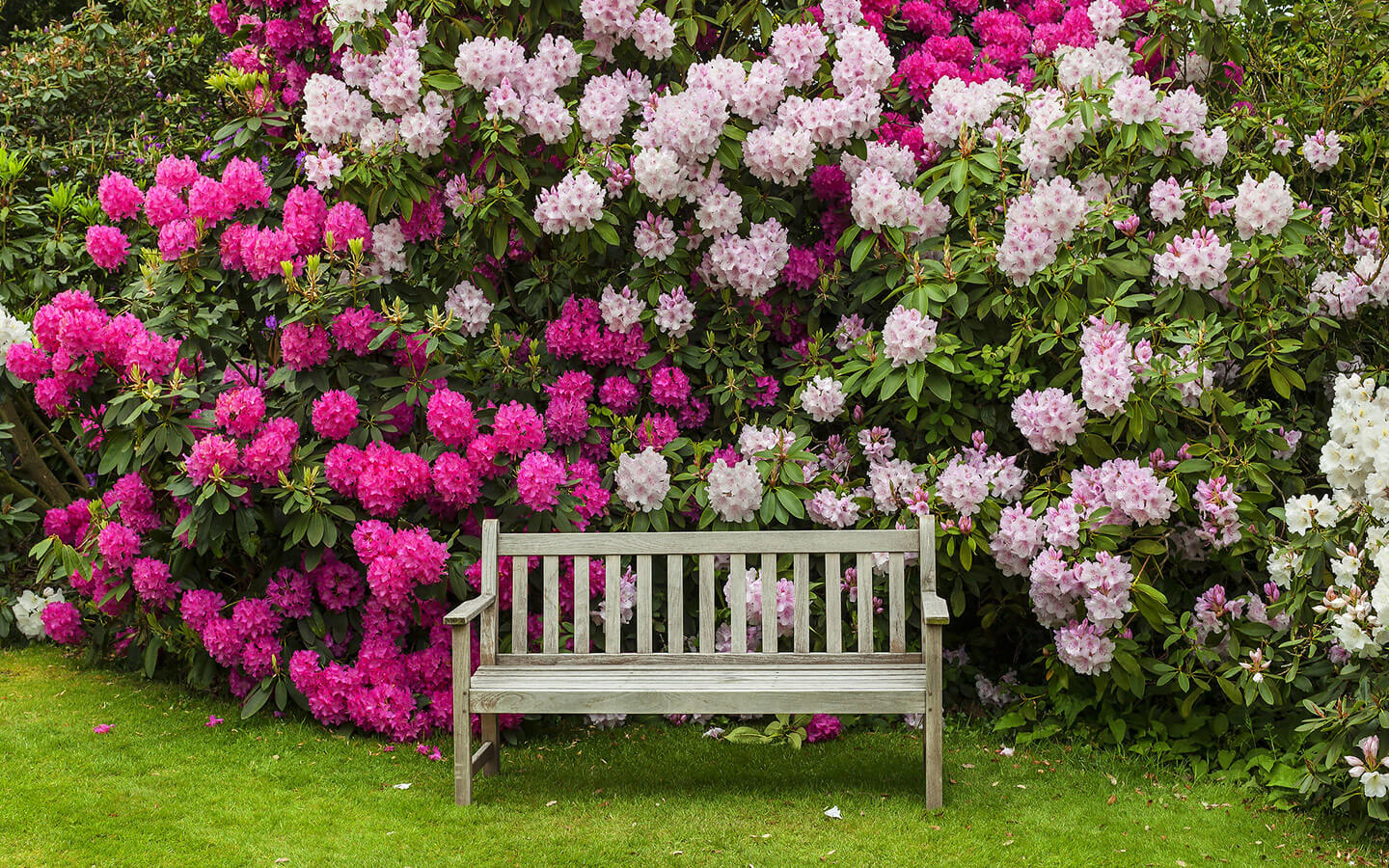 Bench in front of flowers in a garden in Lancaster County PA