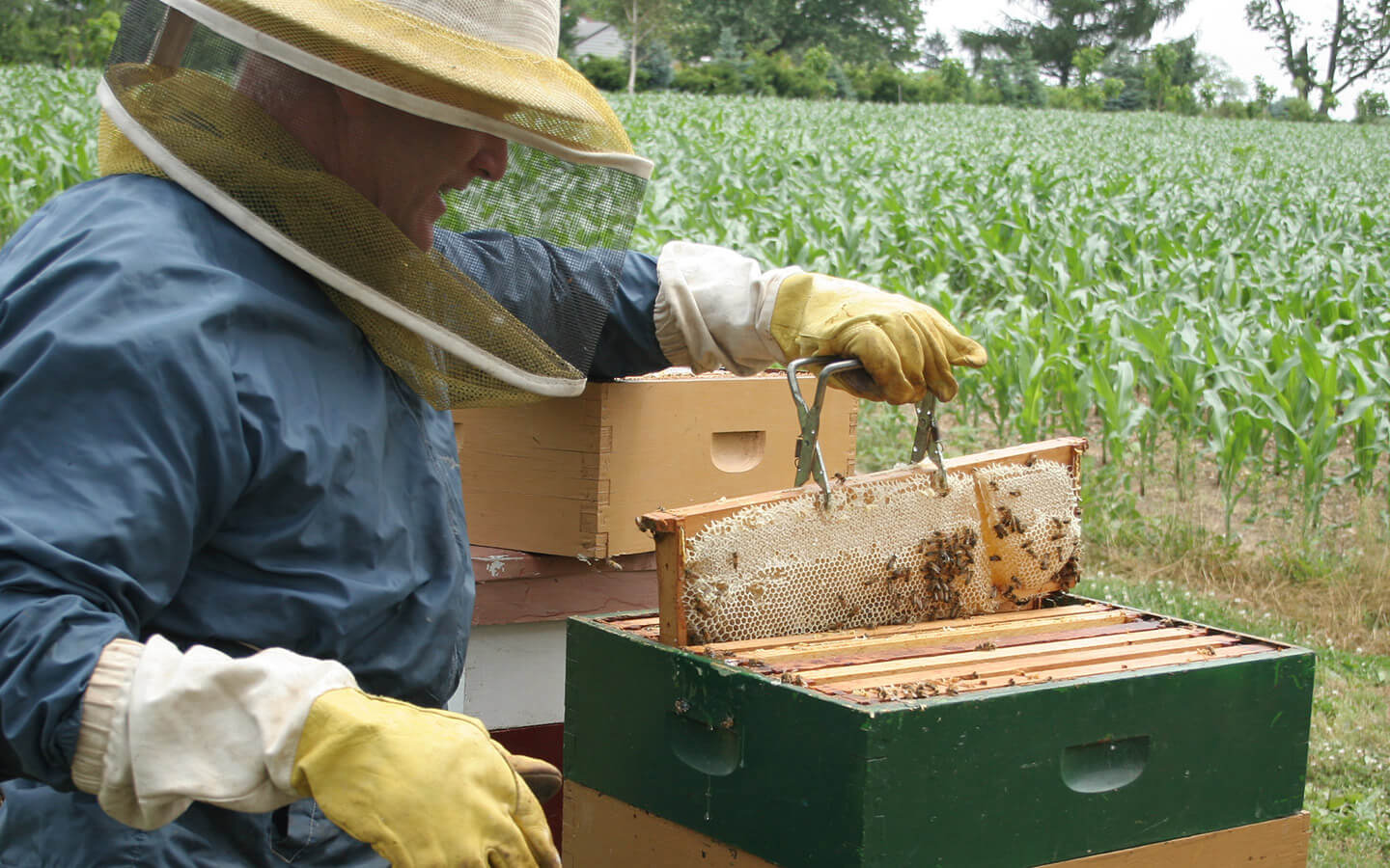 Beekeeping in the gardens at our Lancaster, PA bed and breakfast