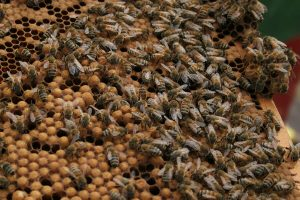 Bees on in a hive