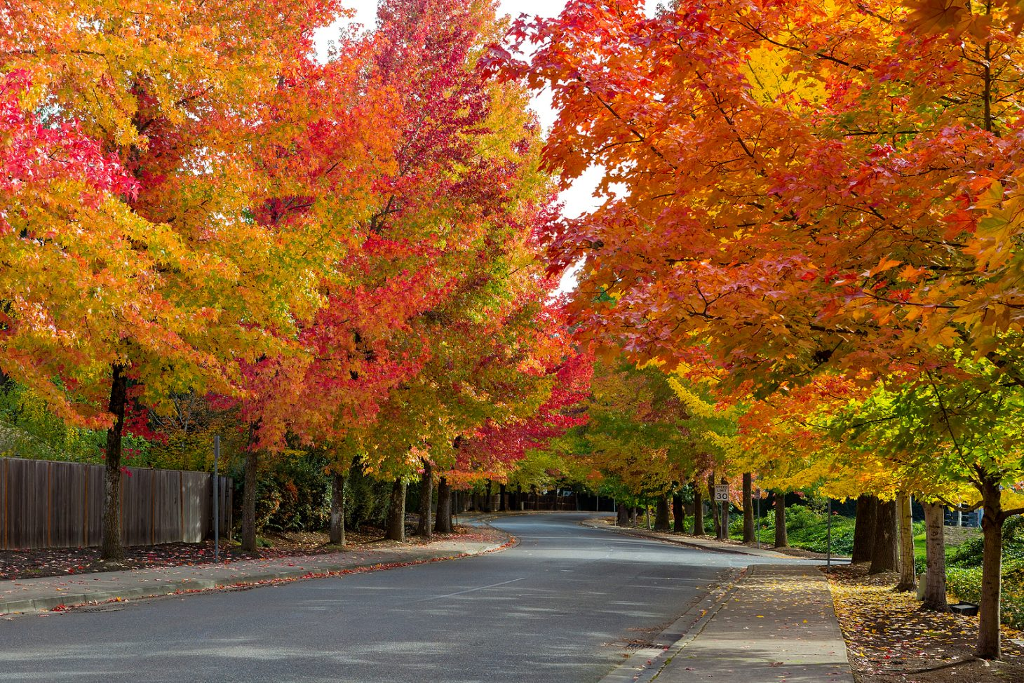 Beautiful streets lined with vibrant fall foliage